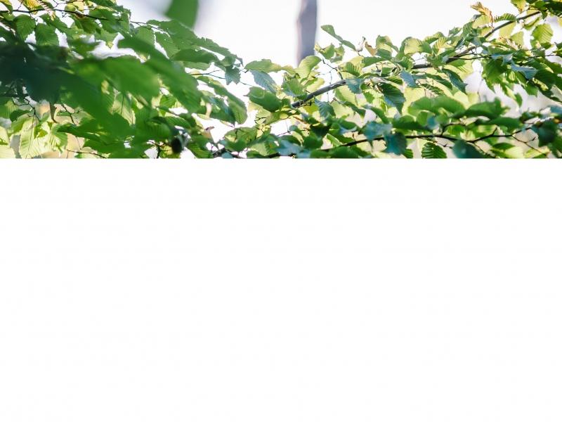 tuinontwerp-isabelle-ockier-c-foto-karen-6